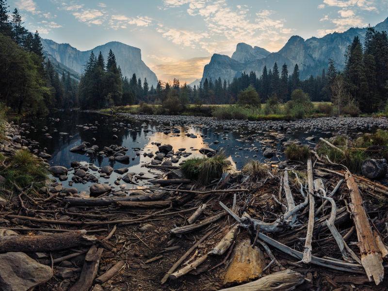 Totholz Lebensraum Holzameisen